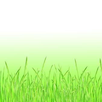 緑の草。水彩画の手描きの明るい緑の新鮮な草と夏の背景。グラデーションで水彩エコデザインハーブの正方形の背景。