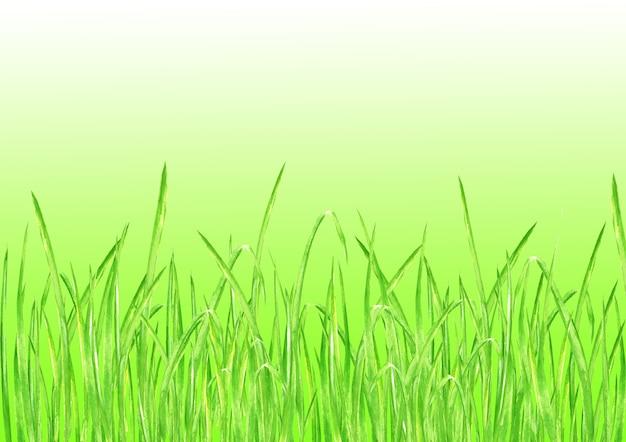 緑の草。水彩画の手描きの明るい緑の新鮮な草と夏の水平方向の背景。グラデーションの水彩エコデザインハーブ背景。