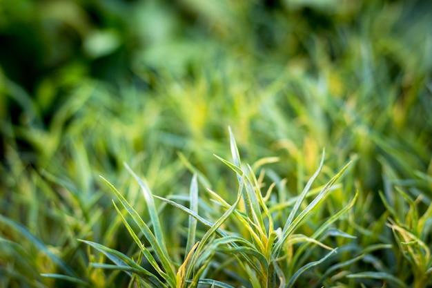 녹색 풀. 여름 또는 봄 아침. 배경 흐리게 가로 이미지입니다. 자연 테마.