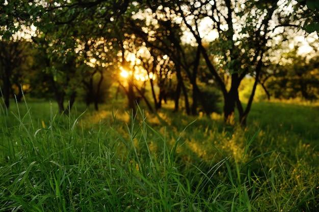 Green grass on a sunset background