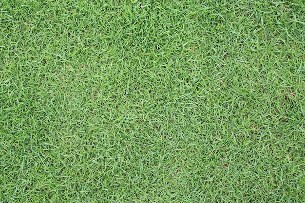 Green grass texture as background