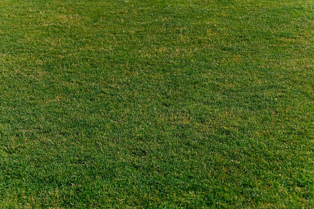 Green grass texture for background.concept on the theme of ecology.