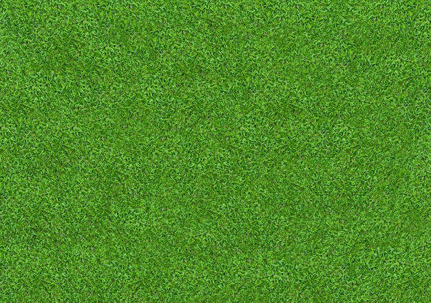 Green grass texture for background. green lawn pattern and texture background