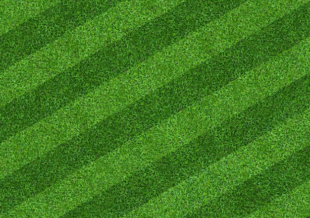 Green grass texture for background. green lawn pattern and texture background.