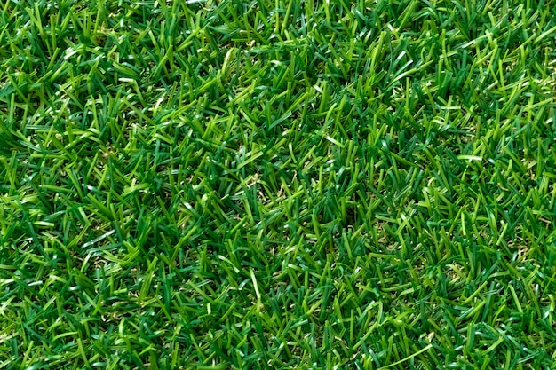 Green grass texture for background. green lawn pattern and texture. top view.