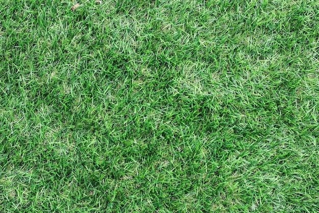Green grass texture background top view of bright grass garden idea concept used for making green backdrop, lawn for training football pitch,