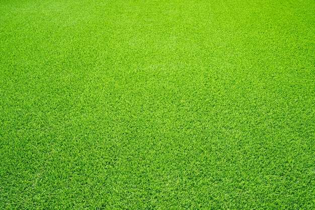 Green grass texture background, top view of grass garden ideal concept used for making green flooring