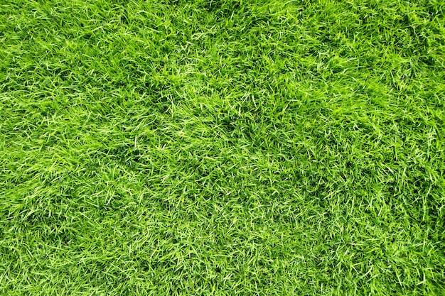 Green grass texture background top view.