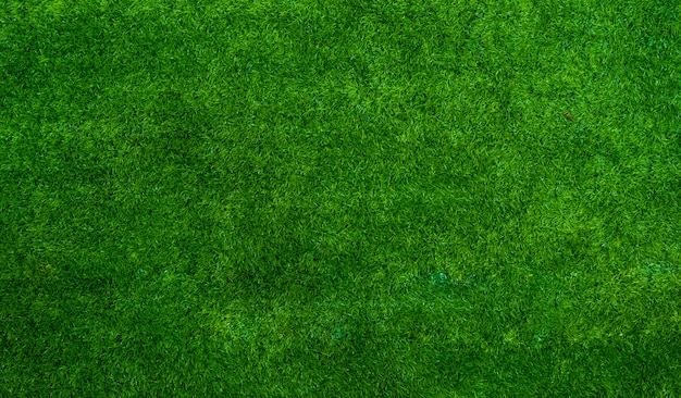 Green grass texture background with a space for text or design