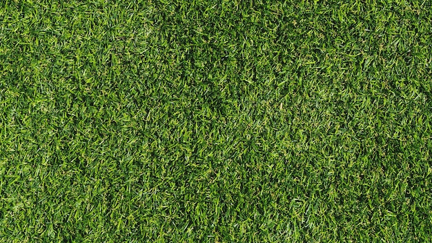 Priorità bassa di struttura dell'erba verde