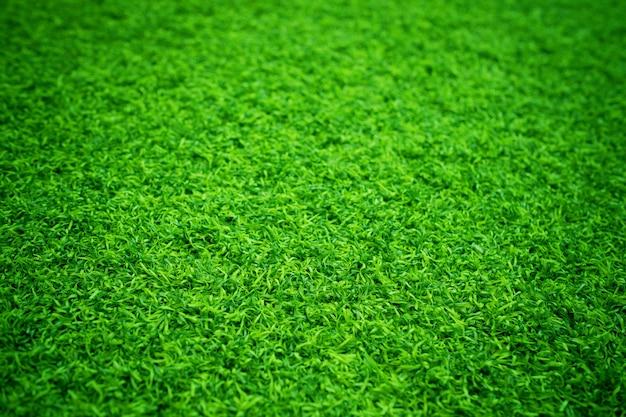 緑の草のテクスチャ背景