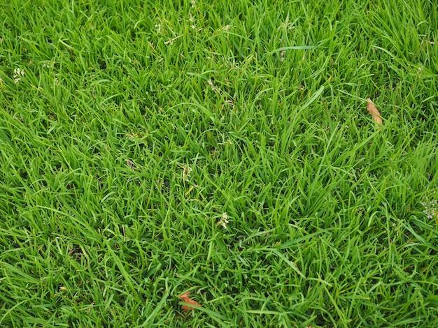 푸른 잔디 질감 배경