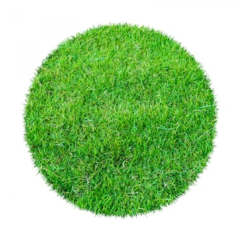 Green grass texture for background.