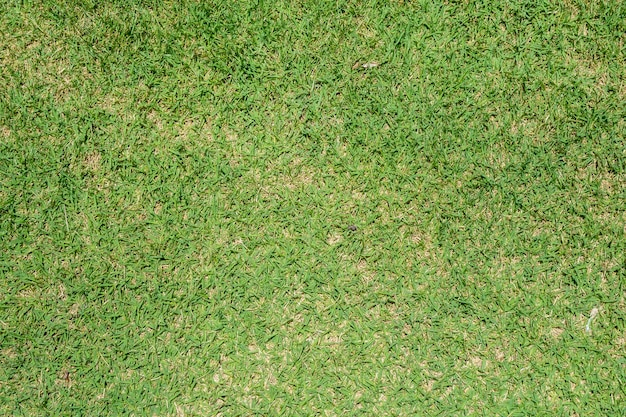 Зеленый фон текстуры травы