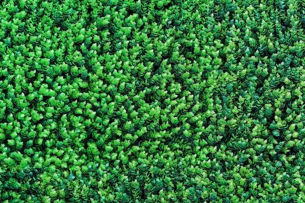 Зеленая трава текстура фон