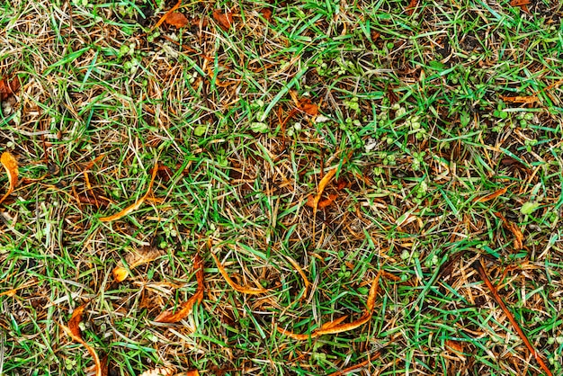 Текстура зеленой травы для предпосылки. зеленый и желтый узор осенней травы. крупный план.