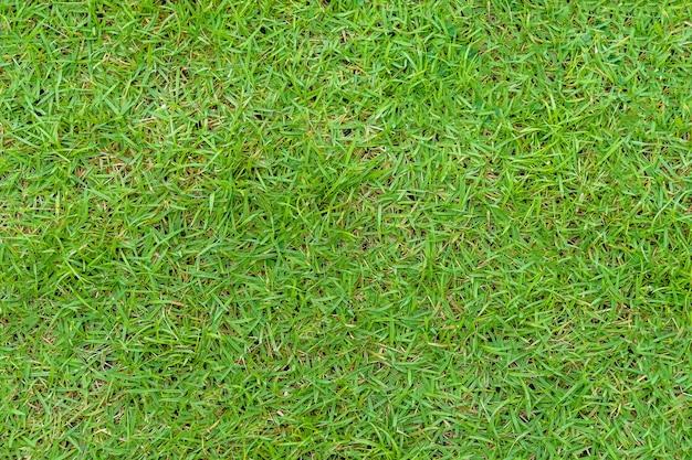 背景の緑の草のテクスチャ。緑の芝生のパターンとテクスチャの背景。閉じる。