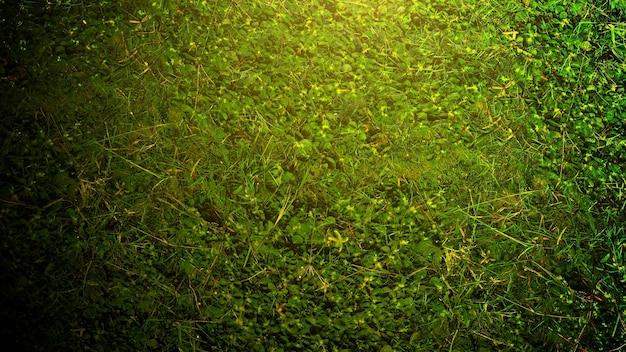 Green grass texture in park, summer day background
