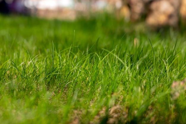 緑の草のテクスチャ。側面図。背景をぼかす