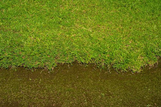 녹색 잔디 질감, 녹색 배경 및 배경을 만드는 데 사용되는 밝은 잔디 정원의 위쪽 전망