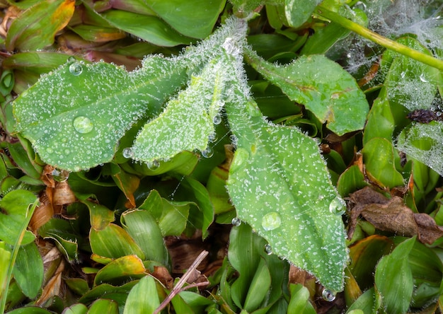 아침 이슬이 있는 푸른 잔디 질감, 녹색 벽지와 배경을 만드는 데 사용되는 밝은 잔디 정원의 꼭대기 전망