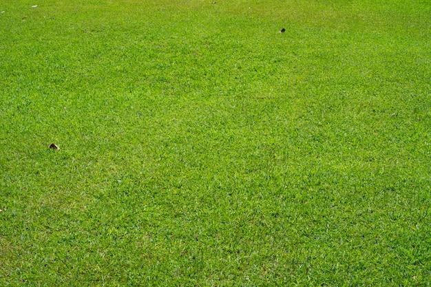 緑の草のテクスチャです。