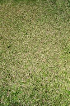 緑の草の上面図