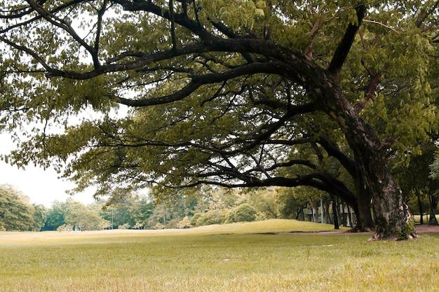 공원에서 큰 나무 아래 푸른 잔디