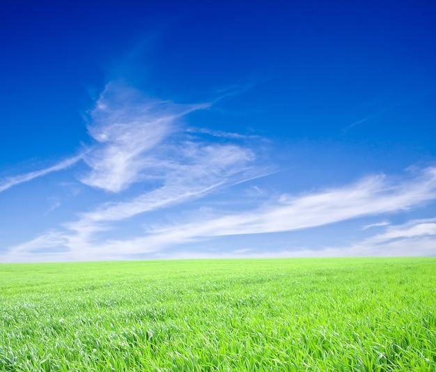 青い空の下の緑の草
