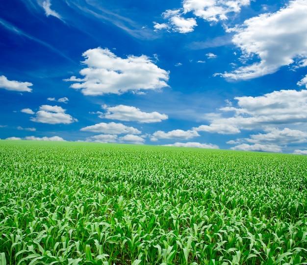 青い空の下の緑の芝生