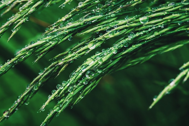 Green grass in water drops after rain, closeup