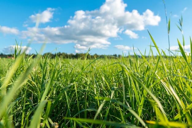 Erba verde e nuvole bianche