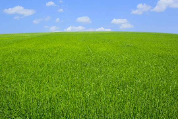 Green grass with blue sky and white clounds