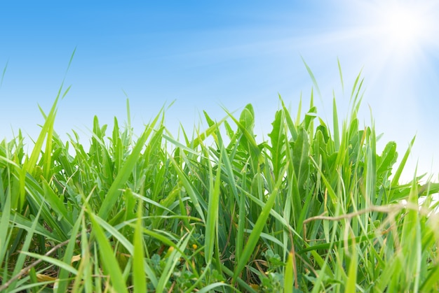배경에 대 한 푸른 맑은 하늘과 푸른 잔디