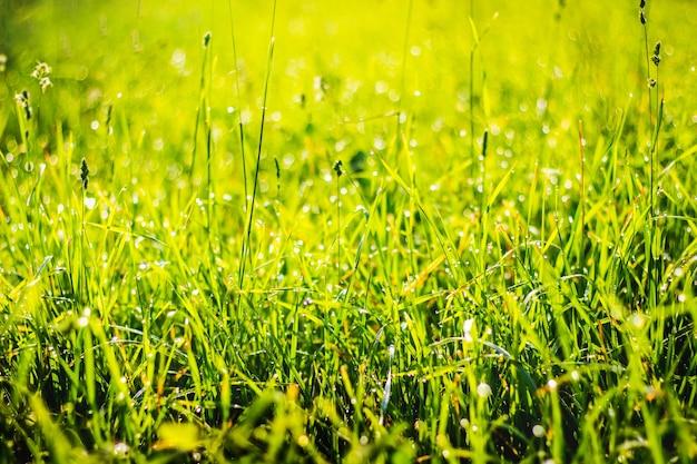 日光の下で露が落ちる緑の草、デザインの背景_