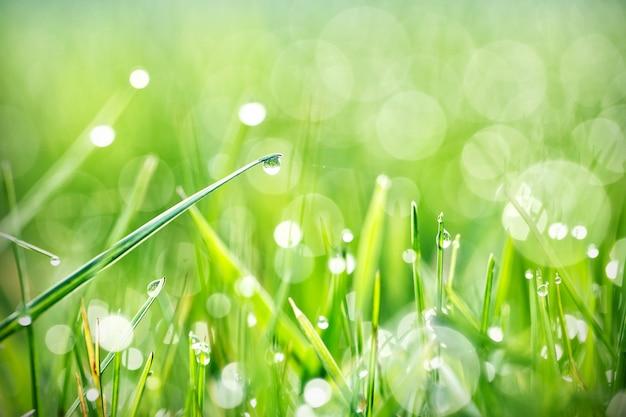 緑の草と露