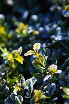 朝の霜、晴れた日に緑の草