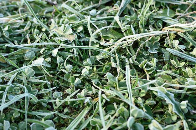 Зеленая трава с утренним инеем и солнечным светом в саду, замерзшая трава с инеем на лугу