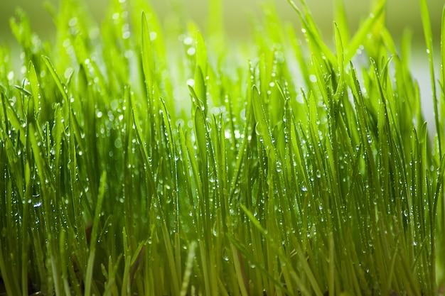 Green grass with rain drops. selective focus.