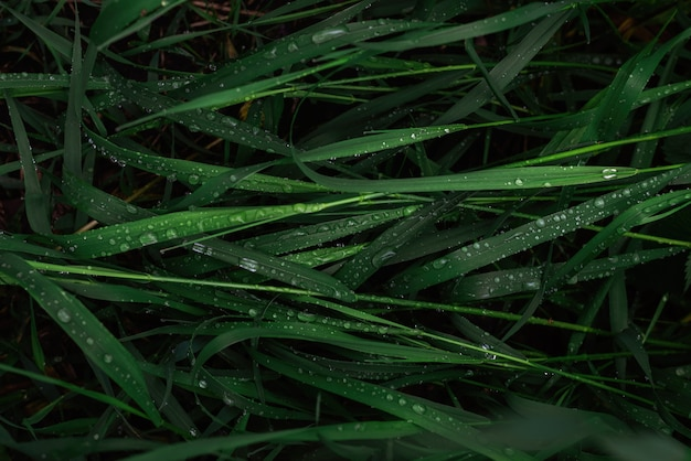 Green grass with raindrops surface