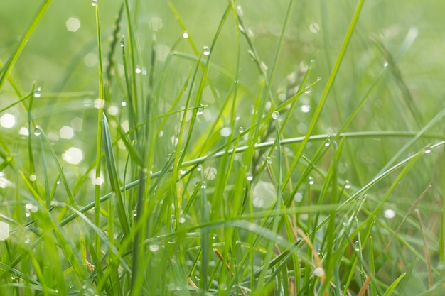 Green grass with sparkling drops of dew and light spots. little depth of field with blurred background