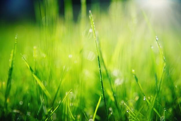 Erba verde con il primo piano delle goccioline di acqua