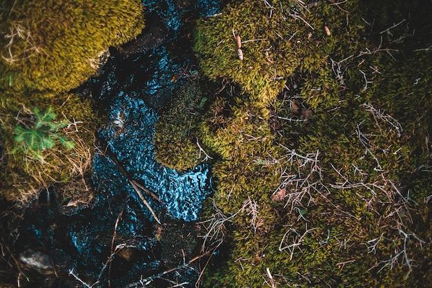 Зеленая трава с каплями воды
