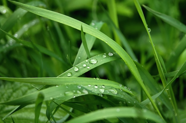 Green grass with water drops. after the rain