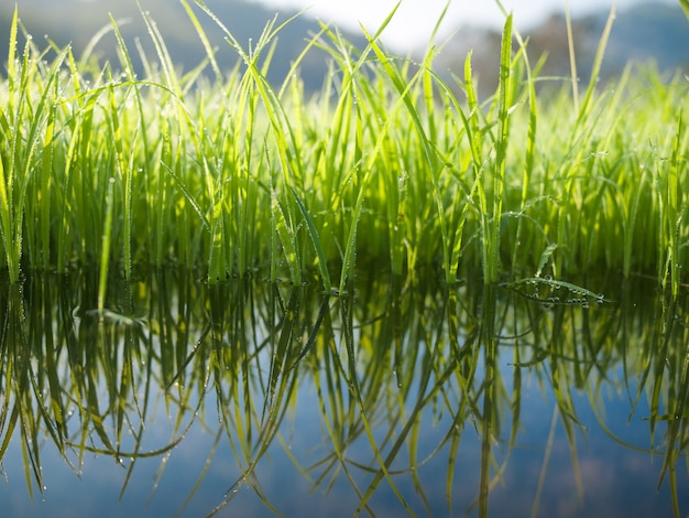 水の反射と緑の草
