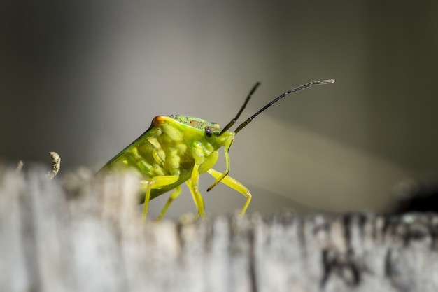 Green grasshopper on gray surface