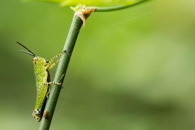 Green grasshopper on plant