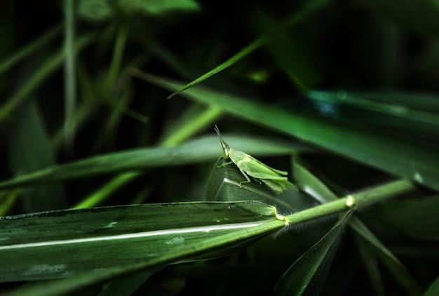緑のバッタが植物の上に立って