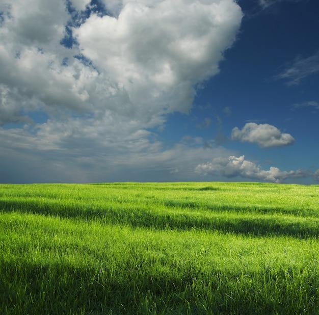 녹색 초원과 폭풍 구름