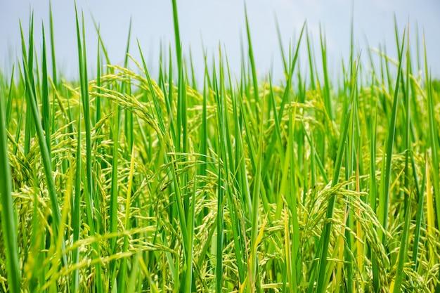 Зеленые луга голубая трава на ферме небо облака облачные фоны